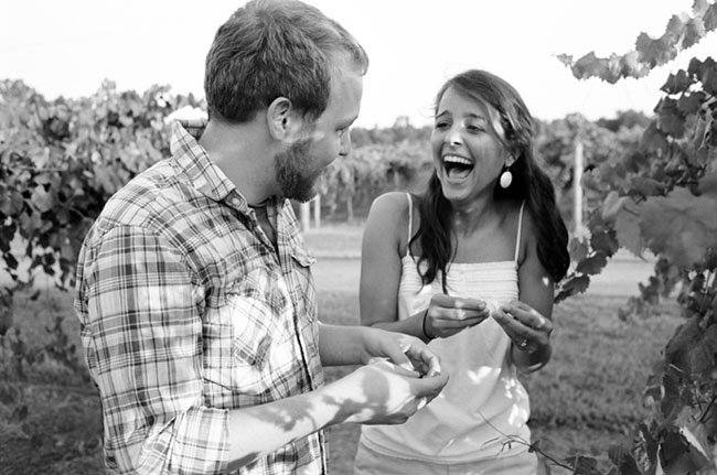 Engaged couple laughing and picking grapes from grape vine in vineyard