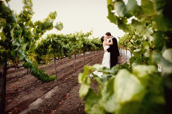 newlyweds kiss among the vine rows