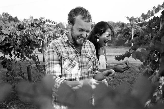 Engaged couple laughing and picking grapes from grape vine in vinyard.