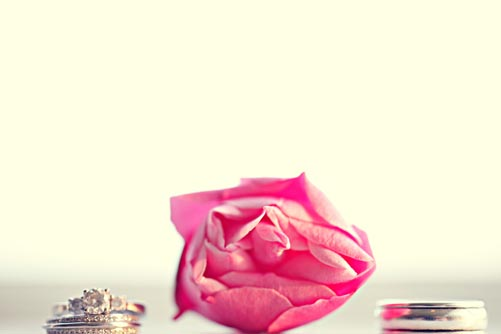 White gold wedding band and white gold engagement ring with round diamond beside pink rose