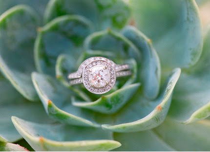 Round diamond engagement ring with halo in a succulent plant