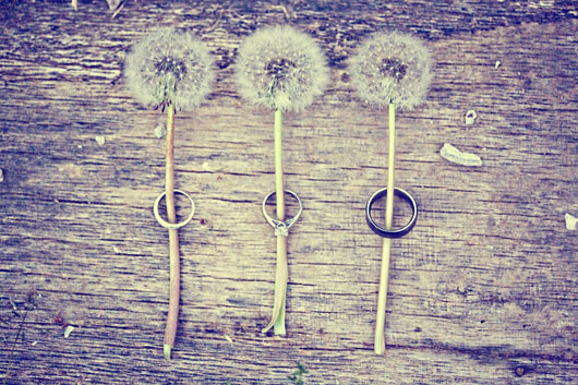 Engagement rings and wedding bands around stems of a dandelion