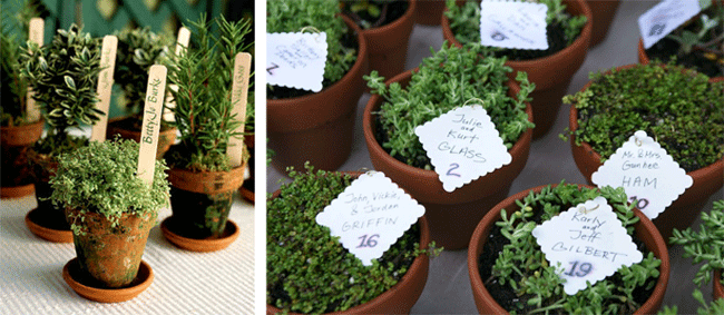 Small planters with wedding table numbers