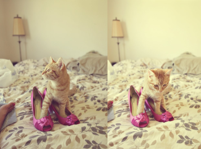 Tabby kitten with paws in pink colored high heels on a bed