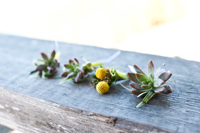 billy ball boutonniere with succulents
