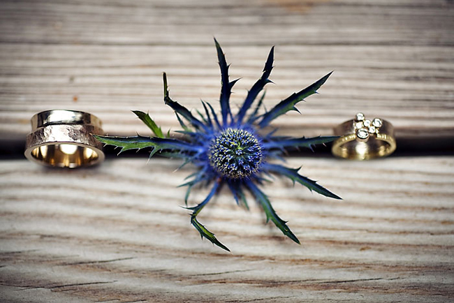 Sea Holly between two wedding rings
