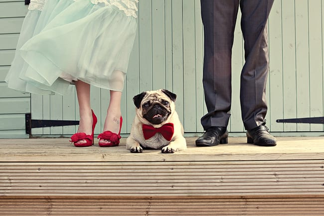 pug wearing red bow tie