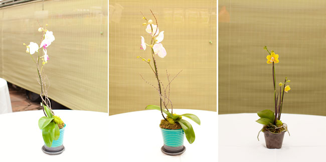 orchid centerpiece at wedding reception table