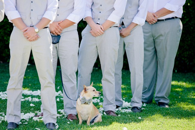 Groomsmen in grey suits with a dog in a bow tie wedding ceremony at cornerstone gardens