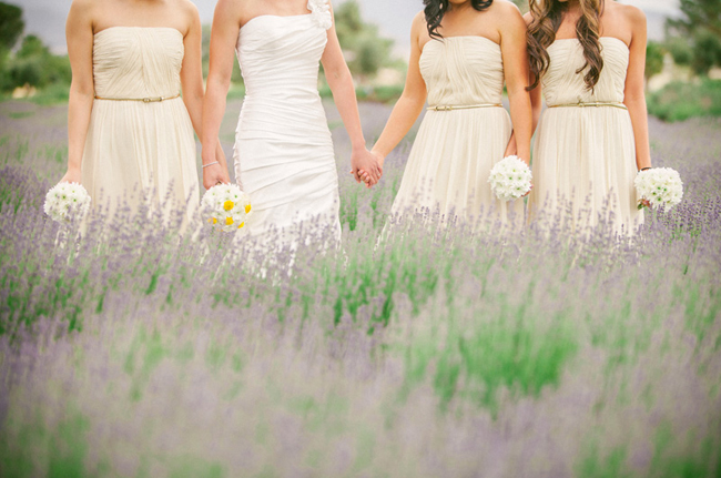lavender field wedding - bridesmaids dressed in white hold hands among the lavender