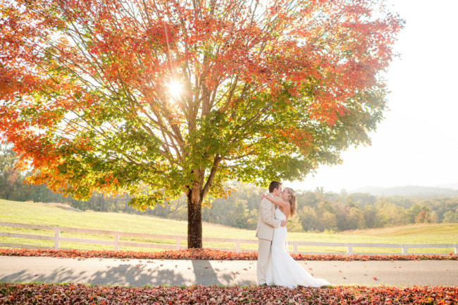 Huge tree with leaves changing colors. Bride and groom kiss beneath