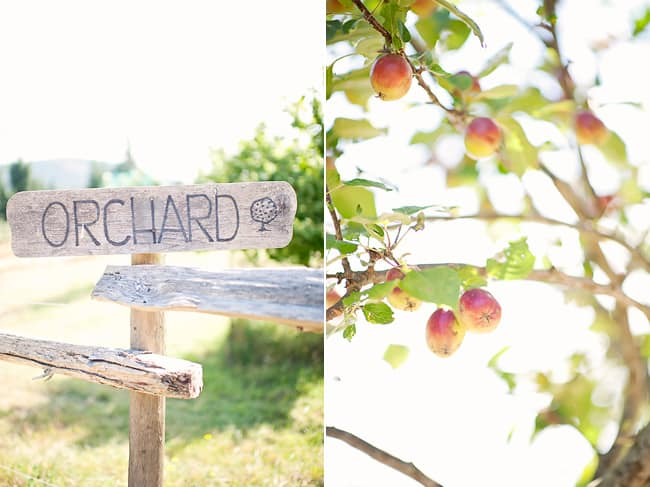 wood orchard sign with apple tree