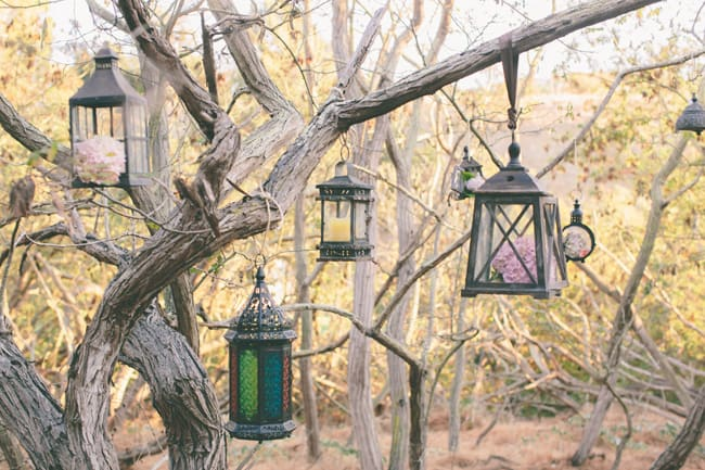 lanterns hang from tree