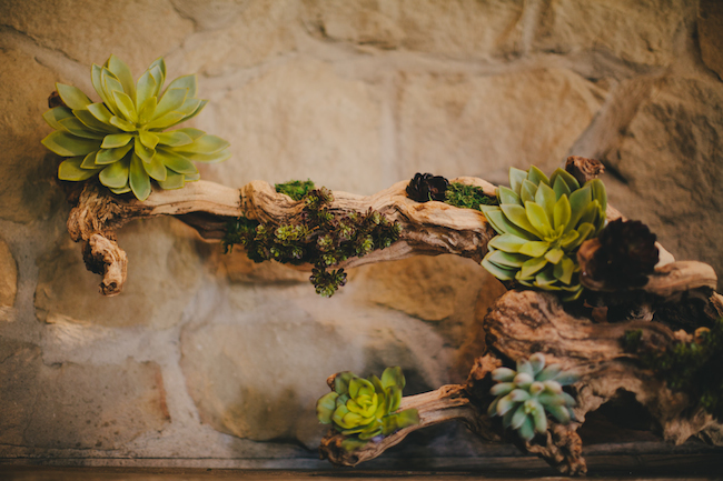 succulent decor on gnarled wood in front of stone wall