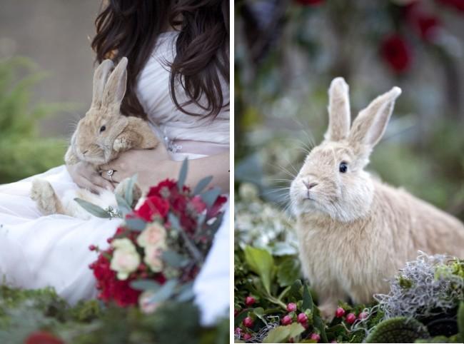 live bunny in brides lap