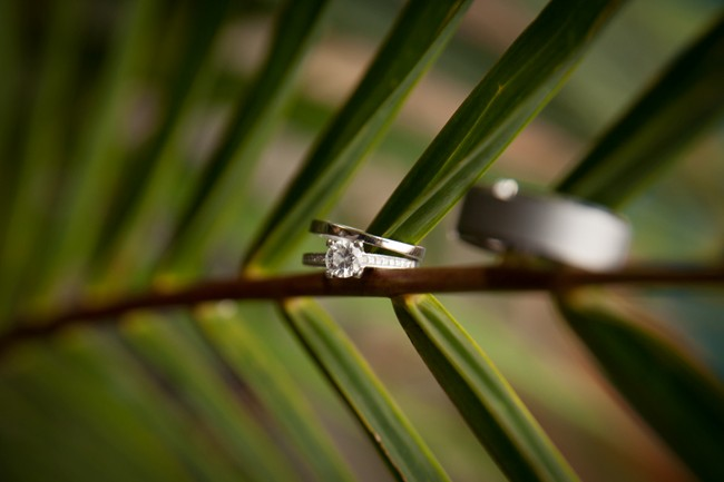 Wedding bands on palm tree