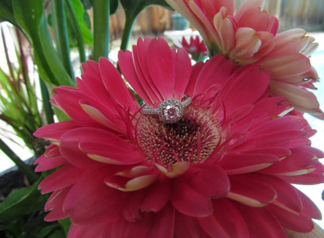 Engagement ring on pink Gerber daisy
