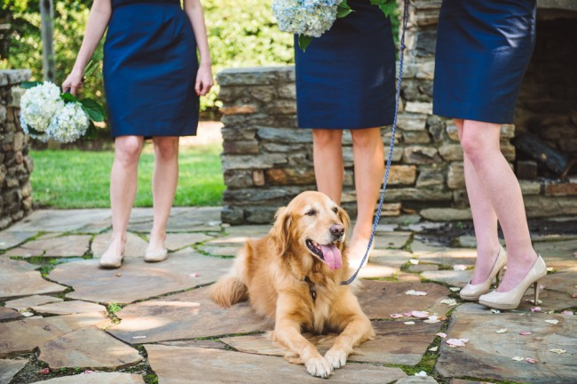 Bridesmaids in navy blue dresses holding blue hydrangeas with golden retriever at North Carolina Arboretum