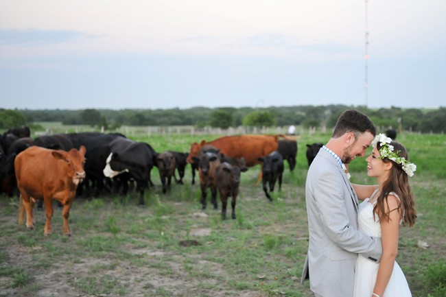 bride and groom with cows in the back ground