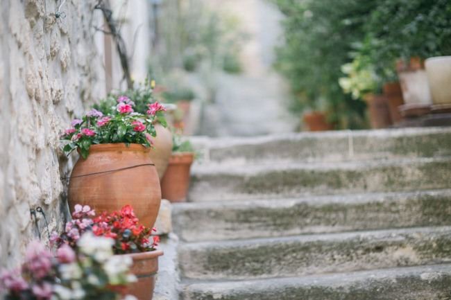 Stone steps with potted plants