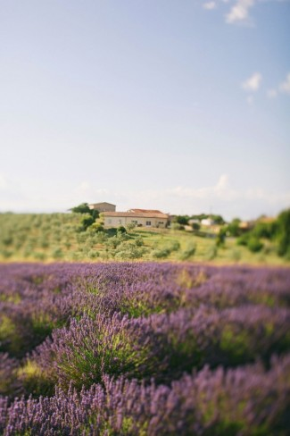 Provence Lavender Fields with country house
