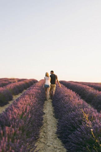 Walking in the rows of lavender fields in Provence