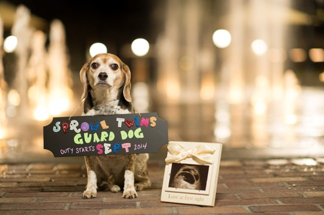 Pregnancy photo shoot - dog standing with sign around neck announcing the pregnangcy standing beside a frame with the ultrasound photo of babaies
