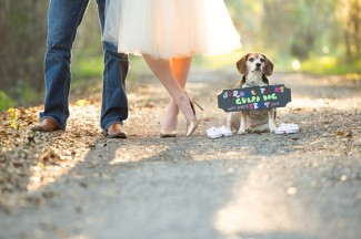 4 3 Maternity photo couple standing on path with beagle with sign around this neck saying they are expecting