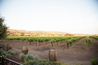 Sunny skies over vineyard at Guglielmo Winery wedding