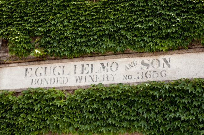 Vine covered wall at Guglielmo Winery in California