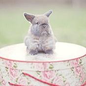 Bunny on Hat Box