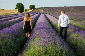 Walking down the lavender field rows