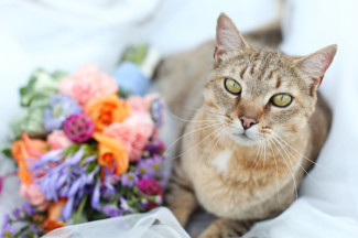 cat sitting beside a bouquet of orange, purple and maroon flowers