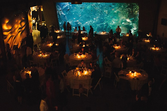 Wedding reception tables in front of large Seattle Aquarium fish tank