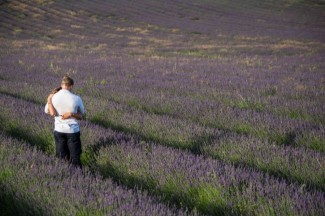 Couple stand together in lavender field at Hitchin