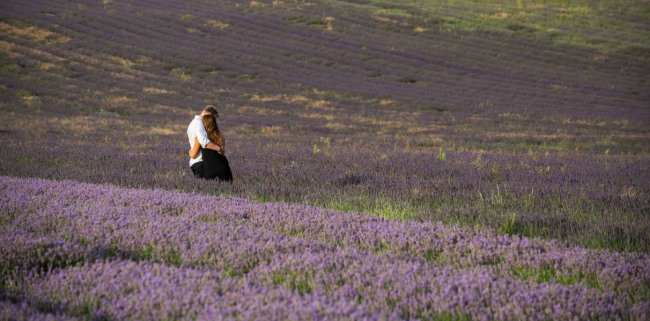 Embracing among the rows of lavender at Hitchin