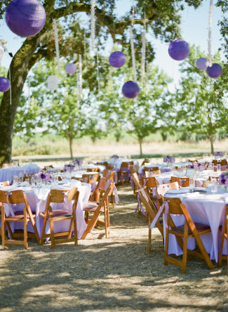 Purple paper lanterns hanging from tree branch