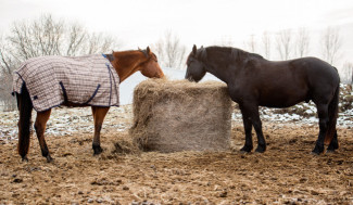 2 horses eating from a hay bale in a frozen field