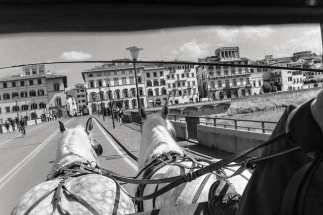 2 horses pulling a buggy over a bride in florence