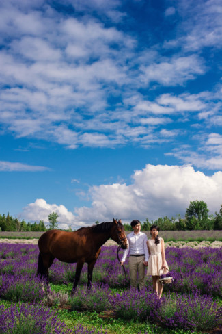 Couple with horse at Terre Blue Lavender field for engagement shoot