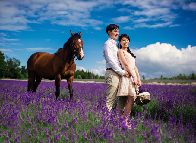Couple standing in a lavender field with a horse