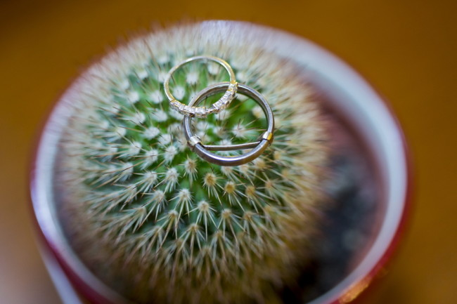 2 wedding bands on a cactus