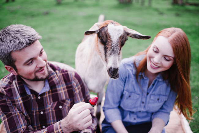 Couple having a picnic and feeding a goat a strawberry