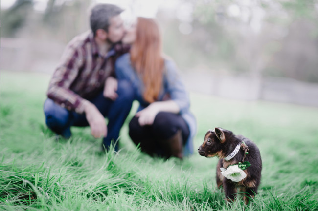 Engagement Shoot with Goats at Left Foot Farm