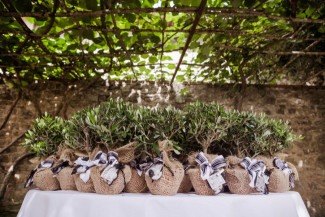 olive trees for wedding favors