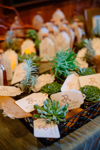 succulent plants as wedding favors