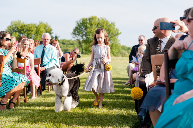 Flower girl walking down the aisle with dog in matching yellow bow tie and collar from etsy