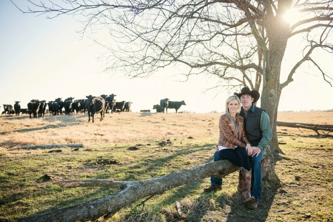 Outdoor engagement shoot on a ranch with cows