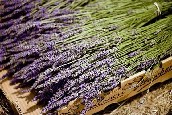 The ultimate guide to lavender wedding ideas if that is the case why wouldnt couples use lavender within their wedding decor junglespirit Gallery