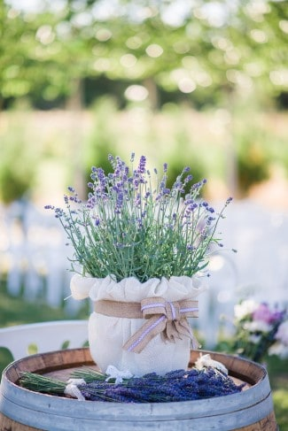 lavender plant in burlap with bow atop wine barrel
